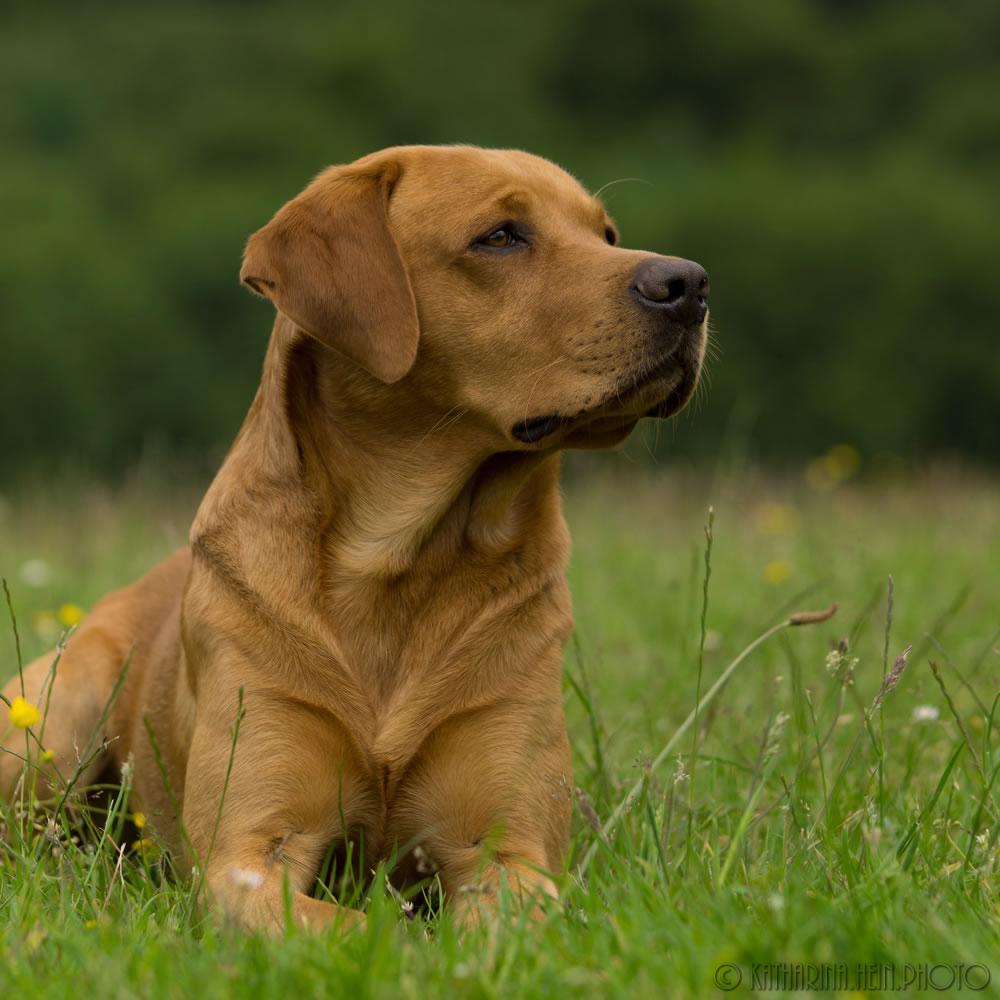 Hundeporträt-quadr-Hank-14