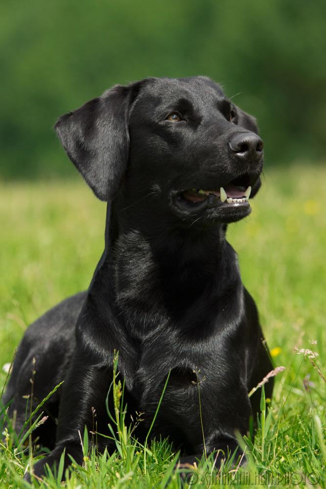 Hundeporträt-Piet-1