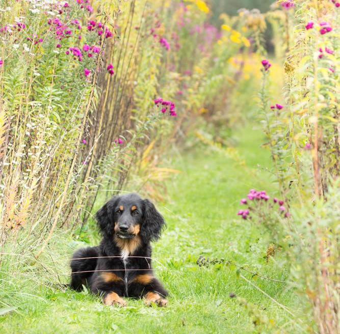 Junger Hund Mischling Herbst Wald Hundefoto München