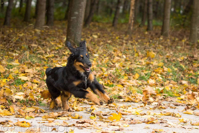 Leila_Der Herbst leuchtet_017_hp
