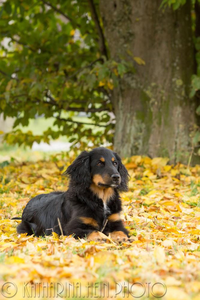 Leila_Der Herbst leuchtet_029_hp