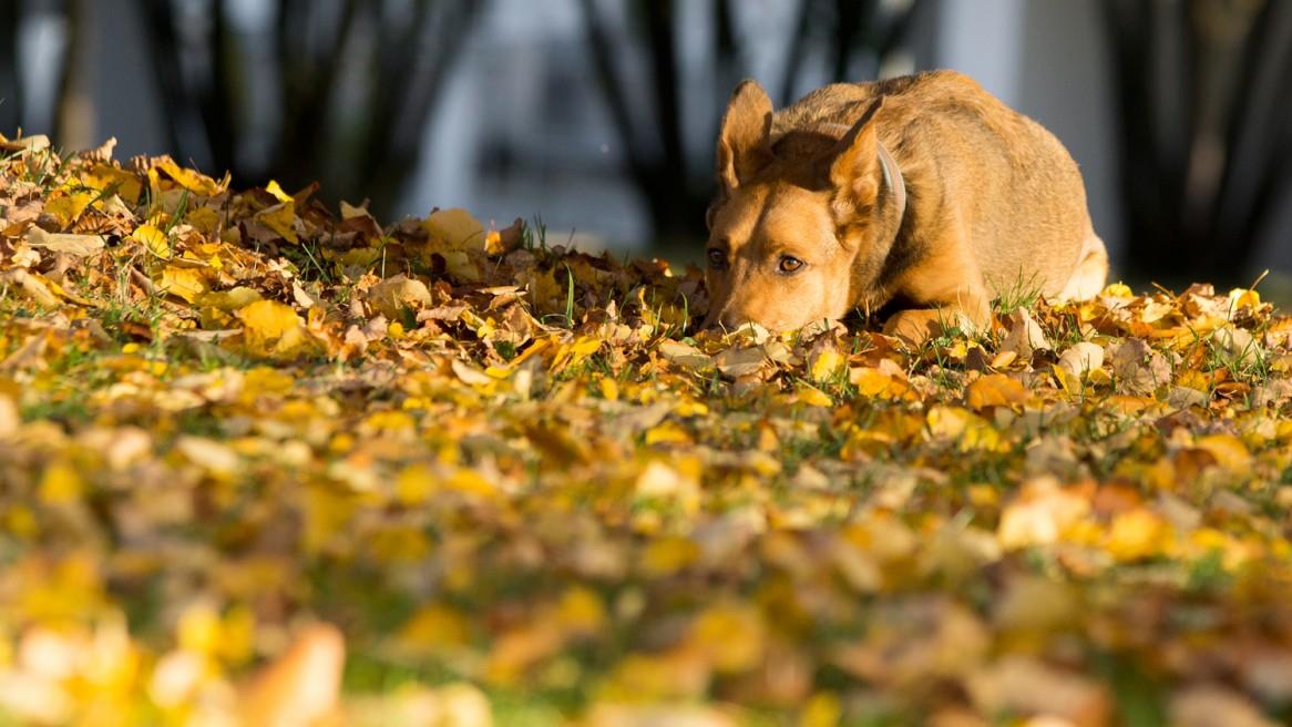 Hund Mischling Herbst Laub Hundefoto München