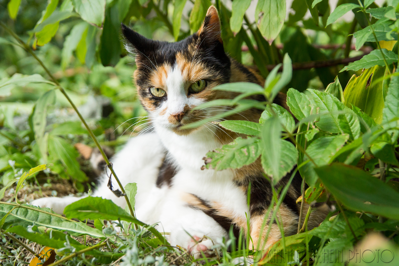 Kunterbuntes Katzenglück DSC03023-als-Smartobjekt-1