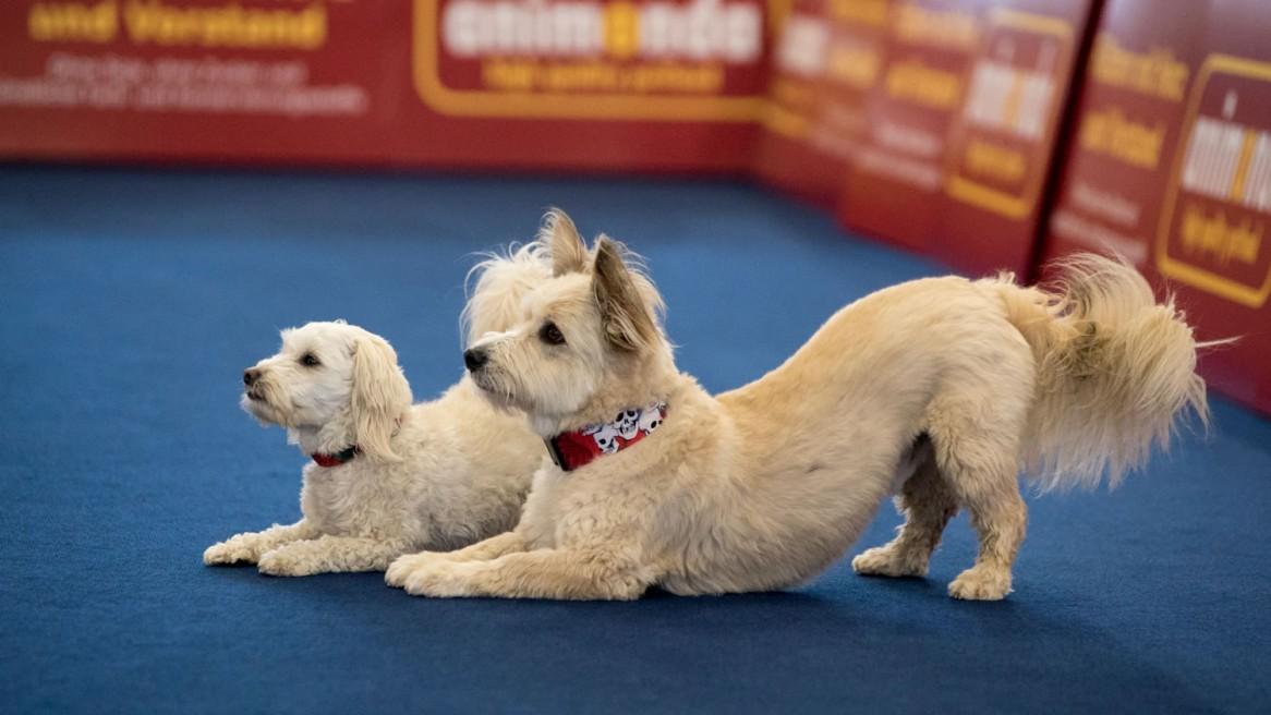 Heimtiermesse München 2016 Dogdancing Hunde