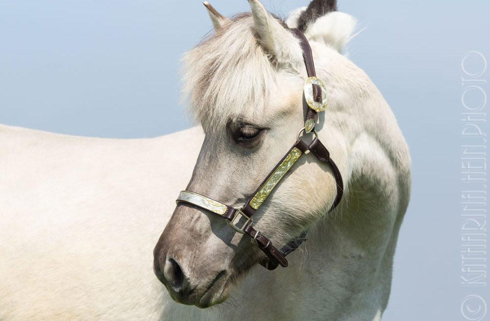 Fjordpferd Porträt Tierfotografie München Pferdefoto