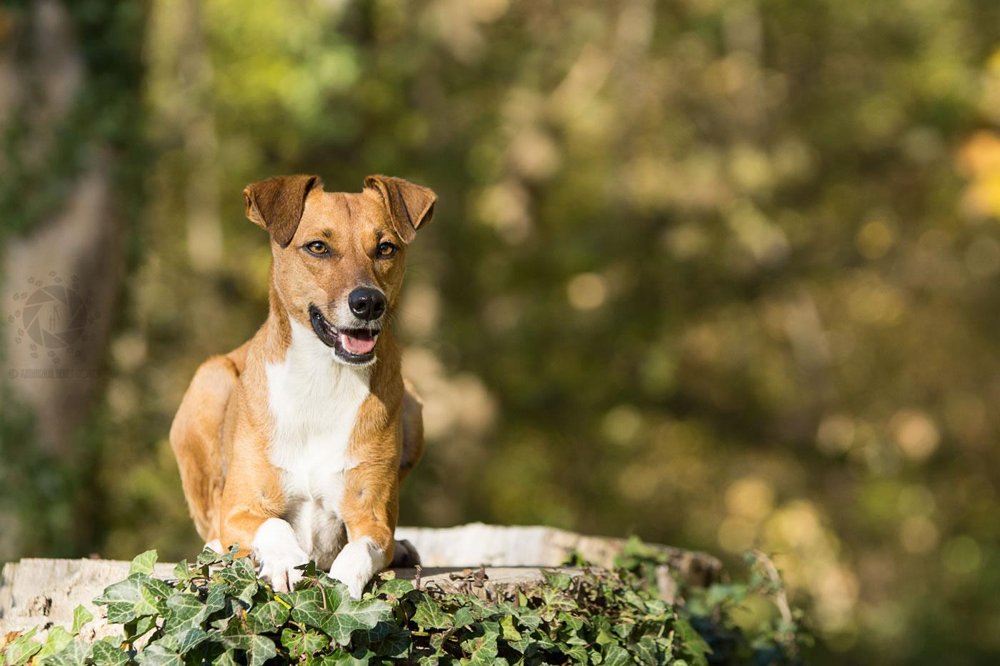 Tierfotografie_München_Hein_039_Lotti_Hundfotografie