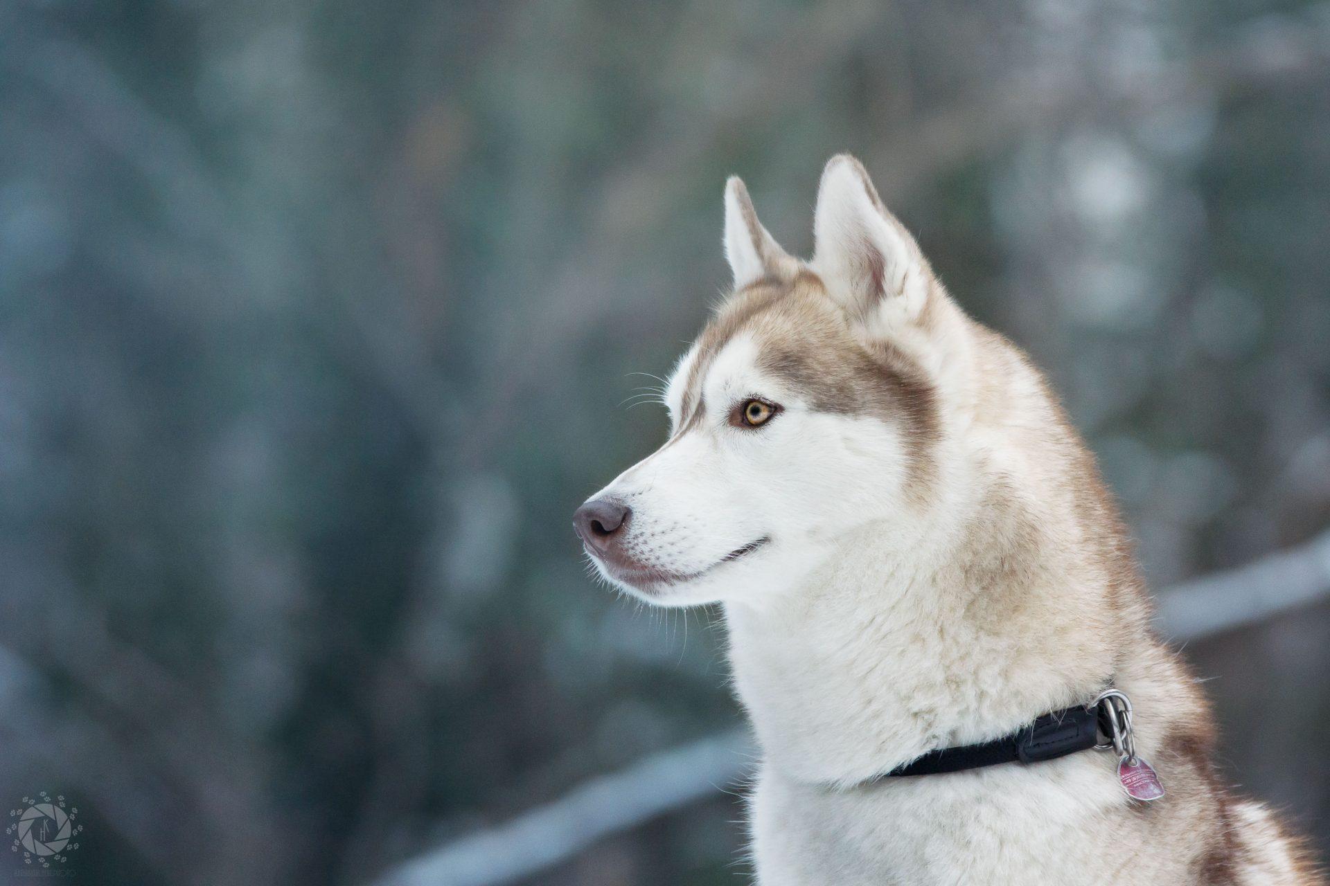 Endlich Schnee in München - Unterwegs mit Husky Yuki