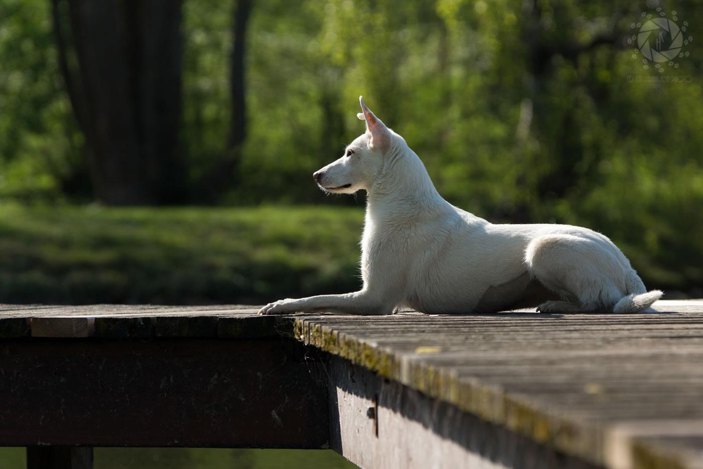 Tierfotografie_München_Hein_Hundefotografie_Olympiapark_031_Nuba