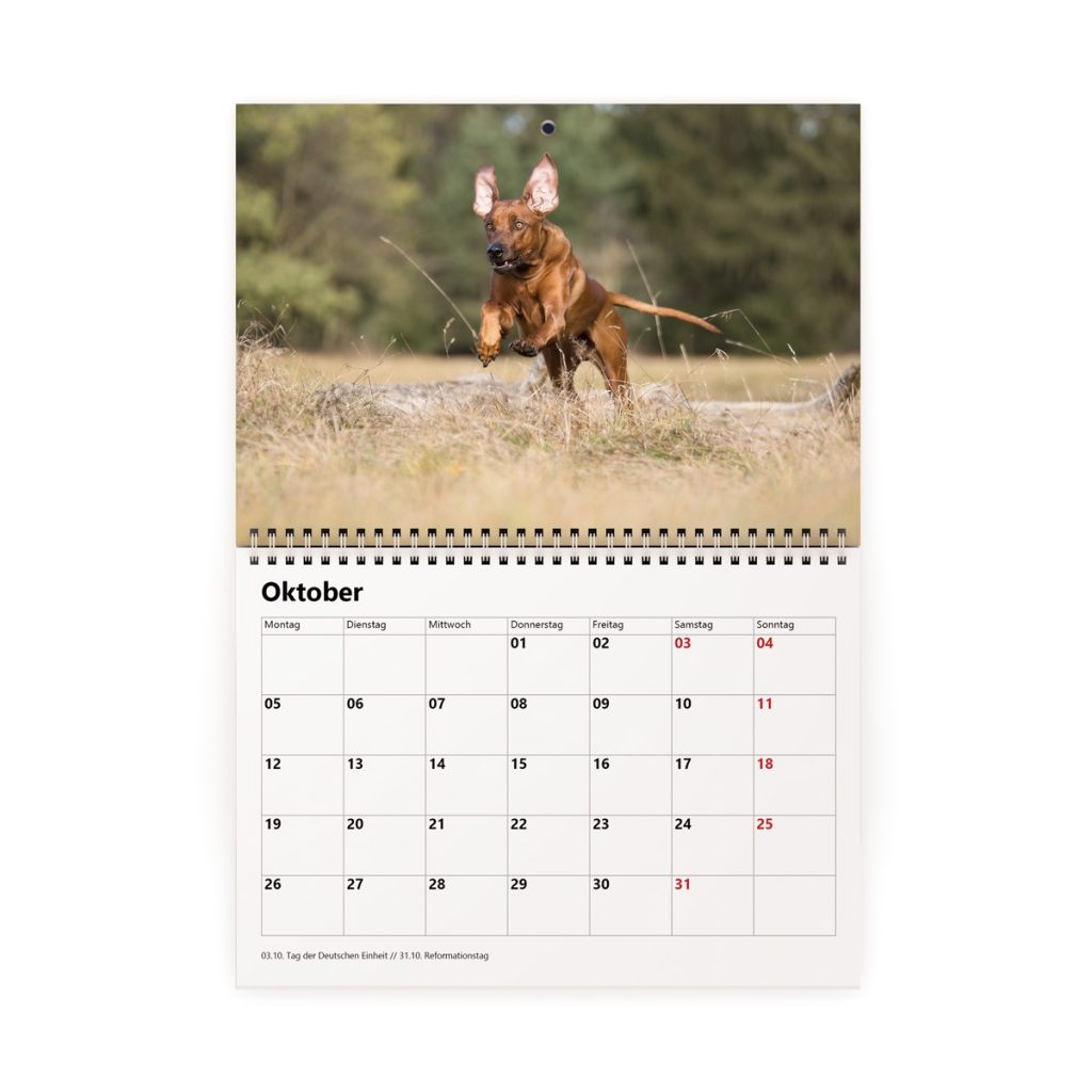 Hundefotografie Kalender Frei Schnauze 2020 Katharina Hein Tierfotografie München