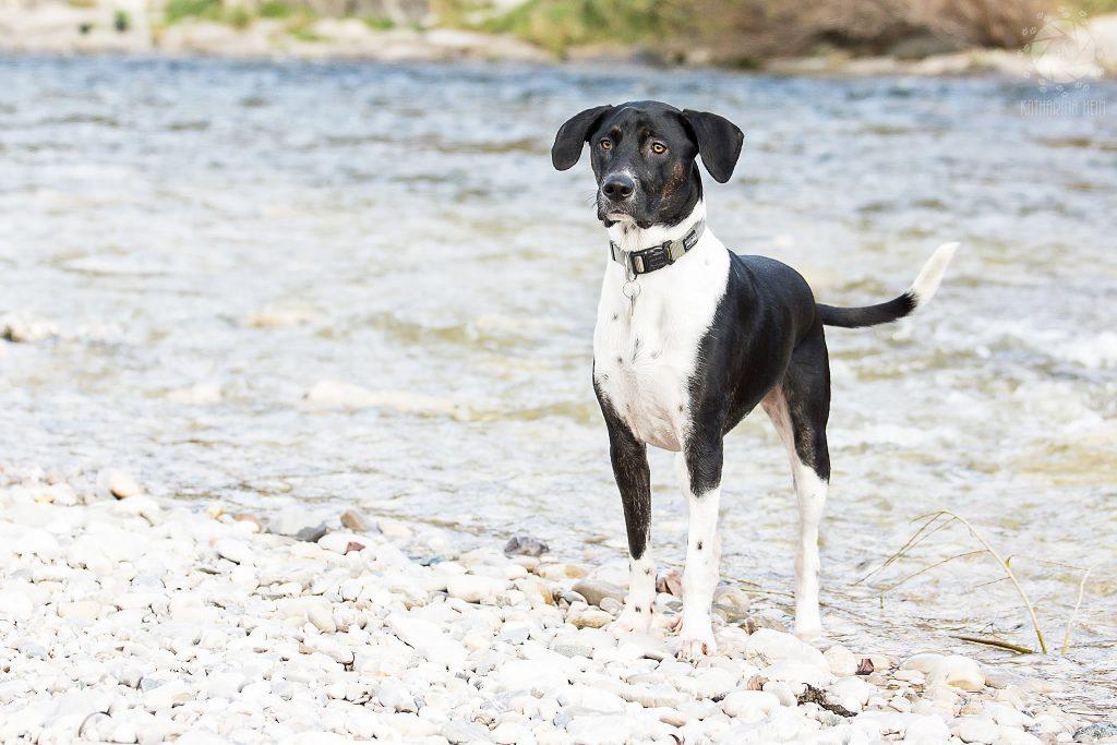 Benito Mischling Spanien Tierschutz Vermittlungsfotos Hundefoto Tierfotografie Katharina Hein München